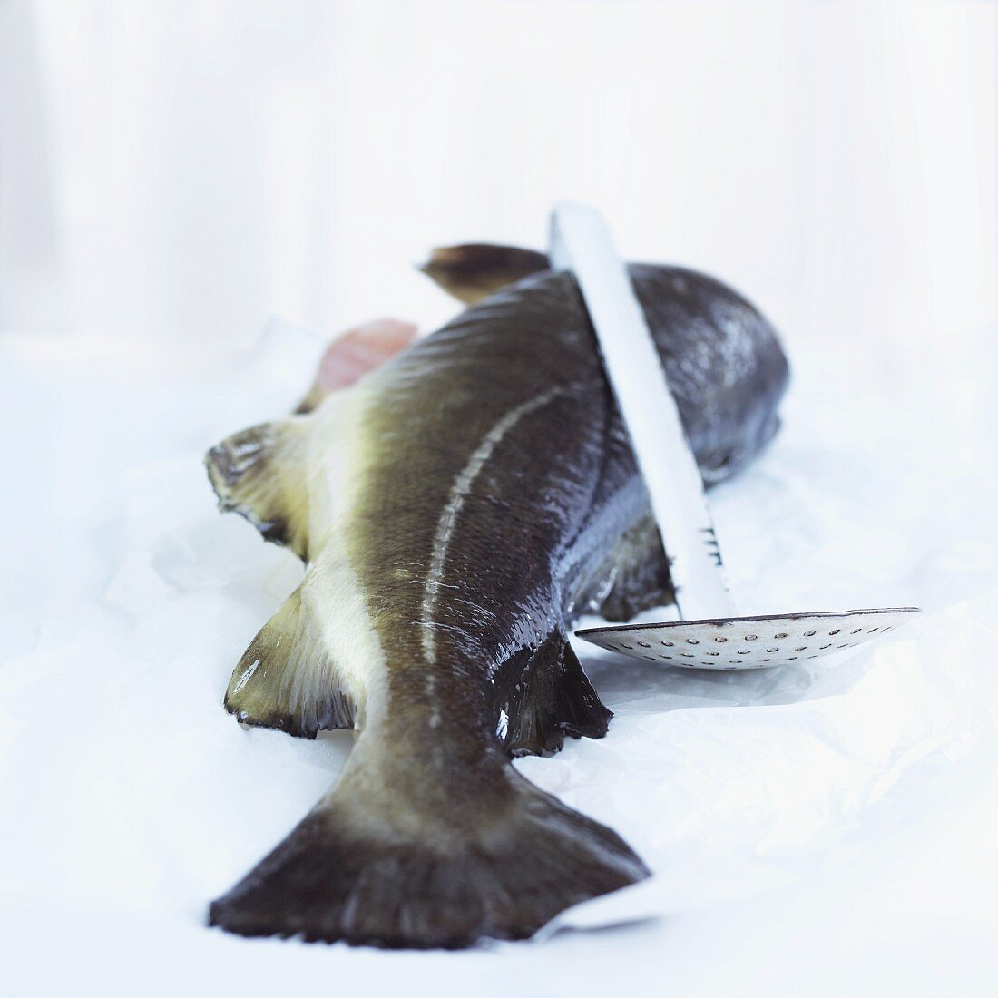 A whole cod and a draining spoon