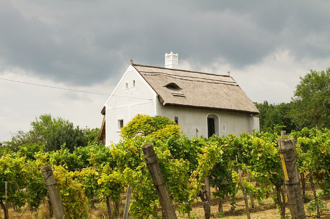 A small house in Balaton (Hungary)