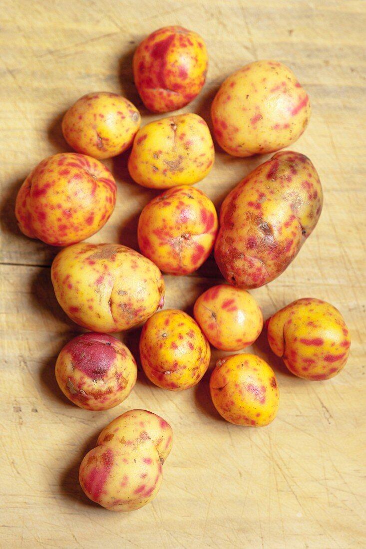 Red and yellow ullucos (ullucus tuberosus, South American root vegetables)