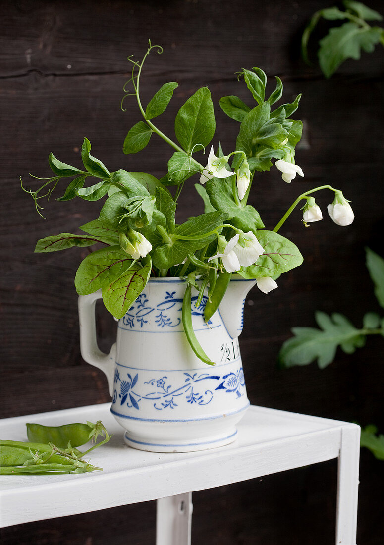 Flowering pea shoots and red-veined sorrel in old china jug