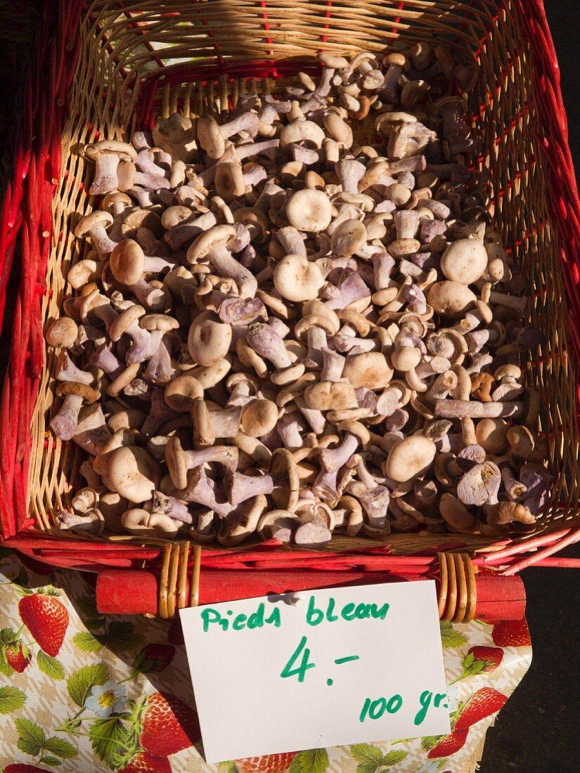 Basket of Bluefoot Mushrooms at The Carouge Market is in Geneva Switzerland