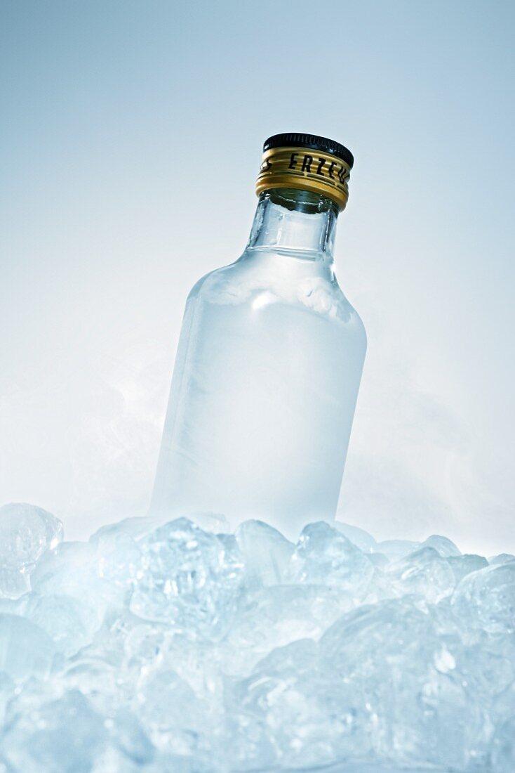 Schnapps bottle in ice