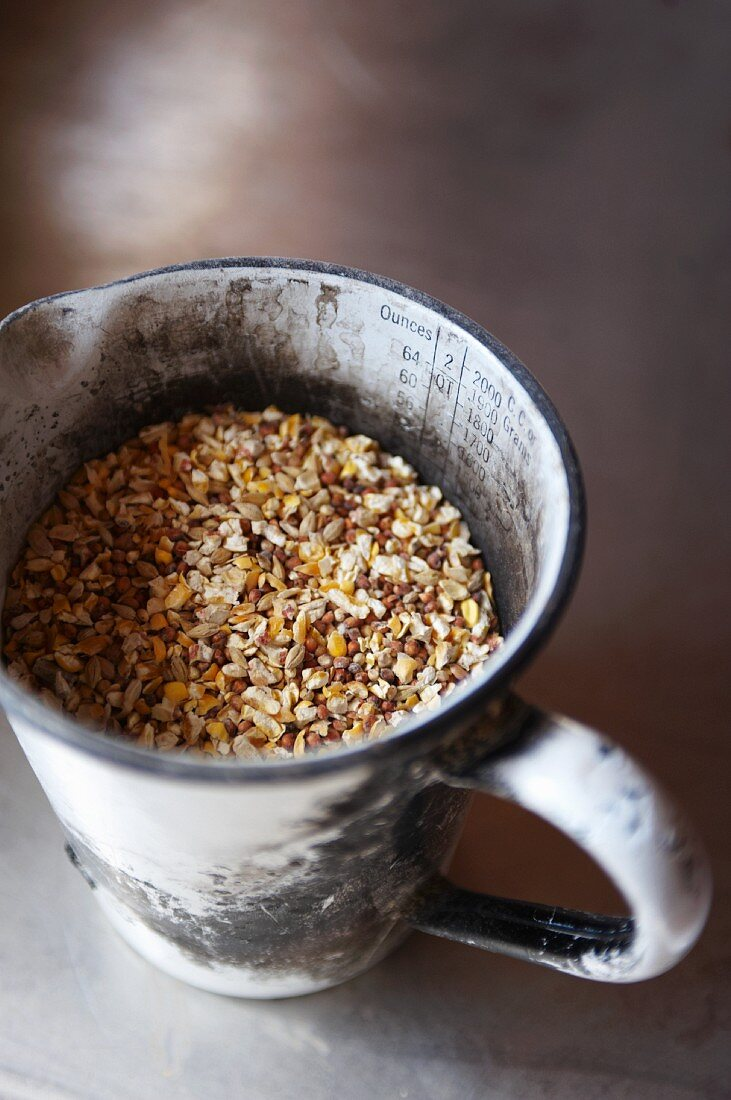 Chicken Feed in a Metal Measuring Cup
