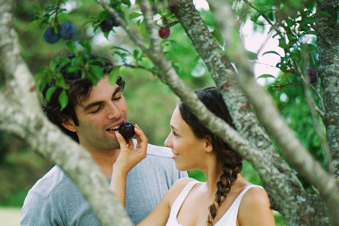Couple by plum tree, woman feeding man plum