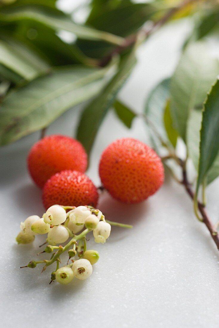 Arbutus berries and flowers