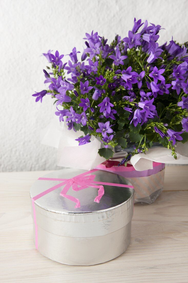 A masking tape bow on a silver cardboard box and a pot of mini campanulas