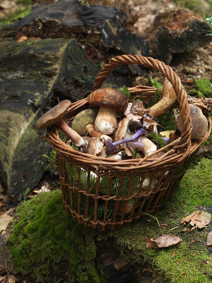 A basket of various mushrooms in a forest