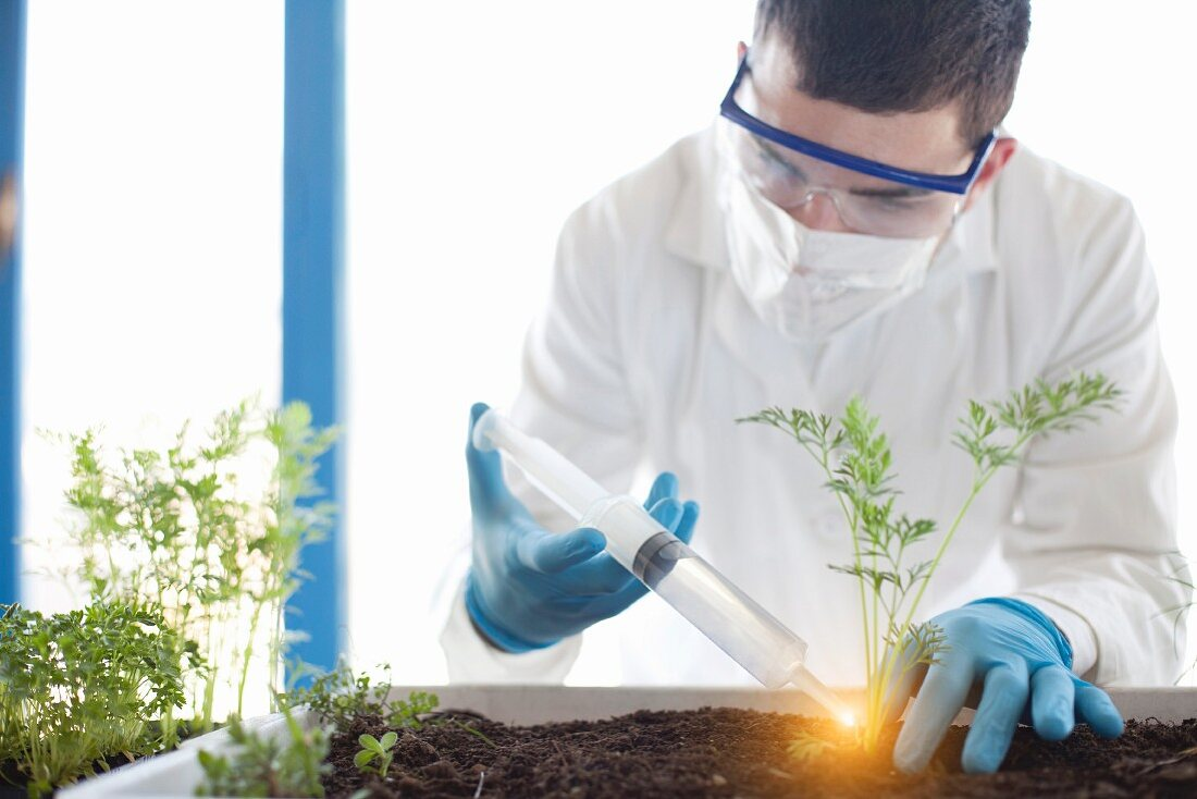 Scientist injecting a luminous liquid on a plant