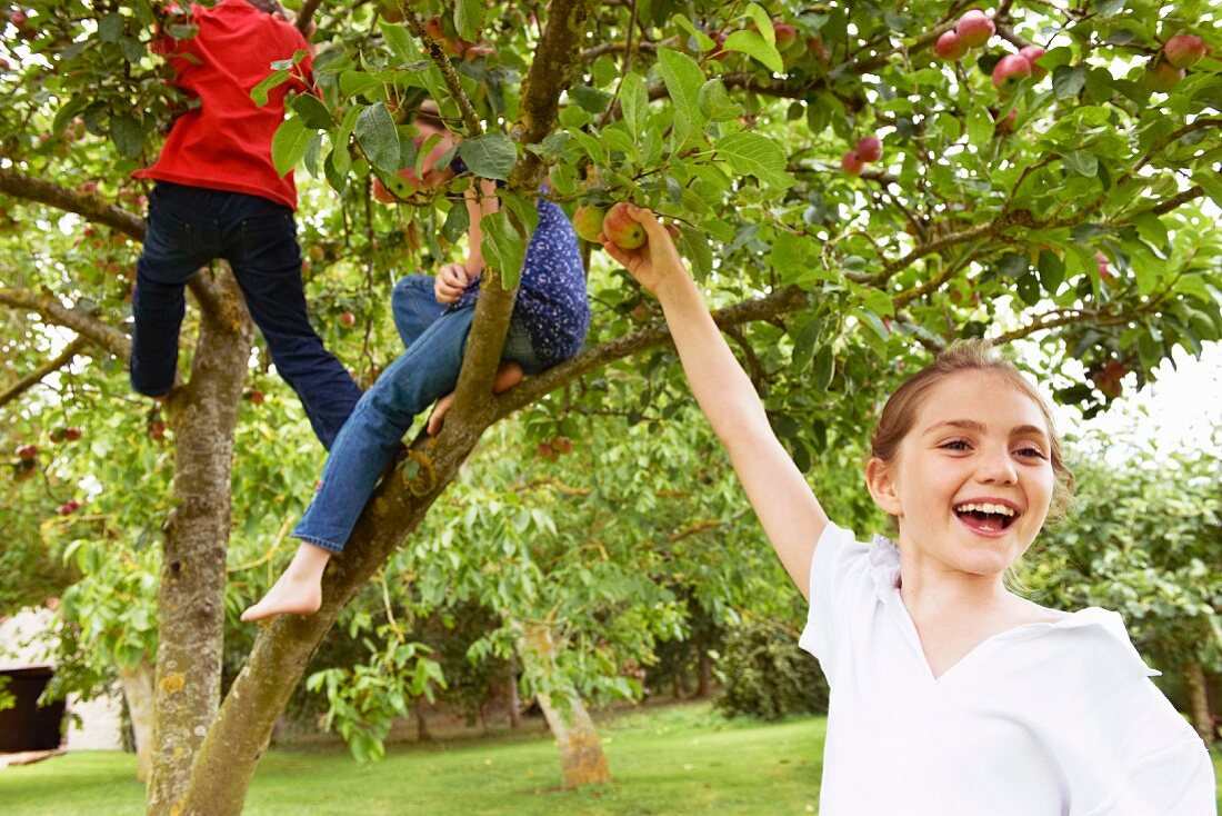 Children playing in fruit tree in meadow