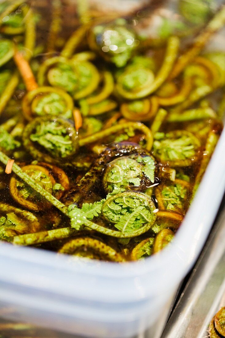 Fiddlehead ferns at the restaurant Oaxen Krog run by chef Magnus Ek, Stockholm