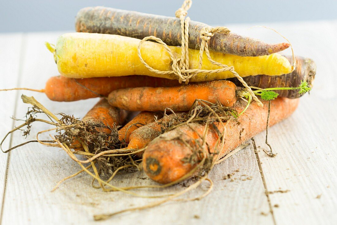 Various organic carrots, partially bundled together