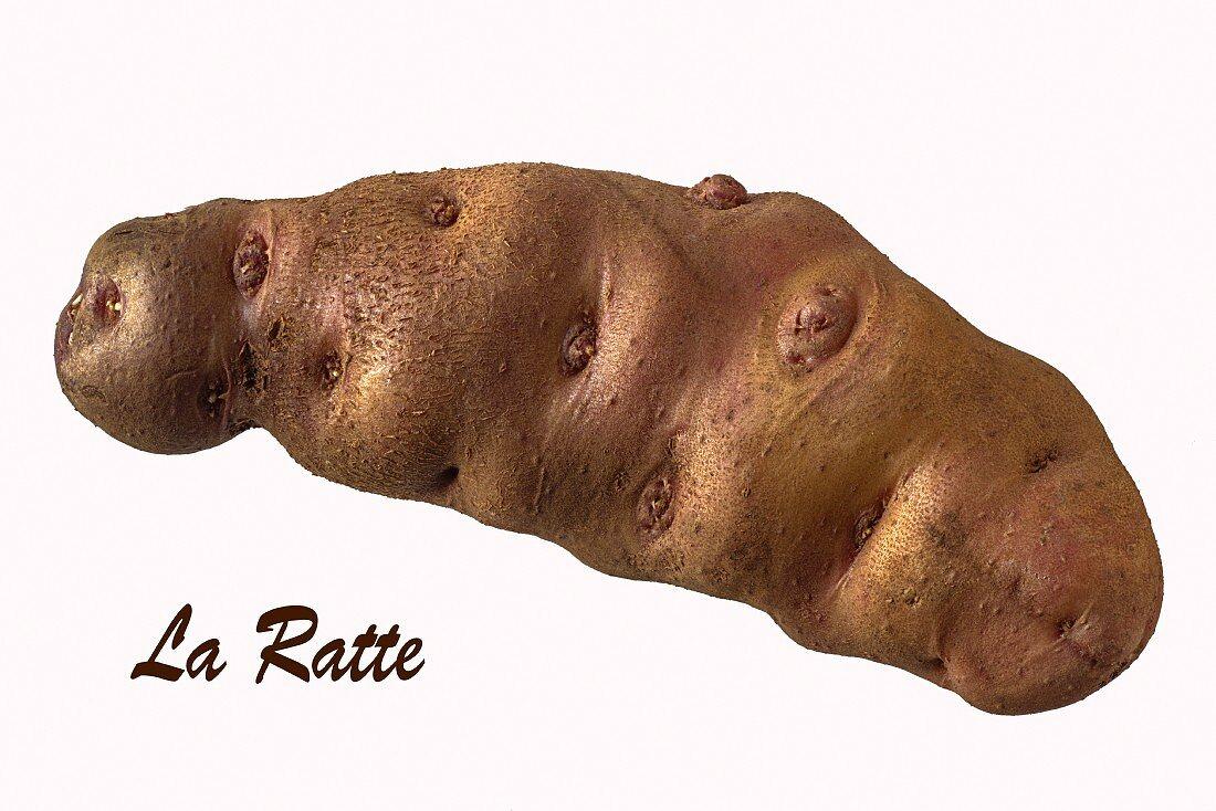 A La Ratte potato