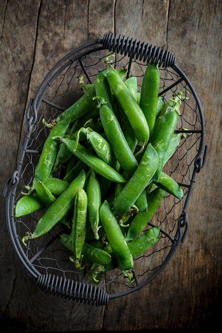 Fresh pea plants in a metal basket