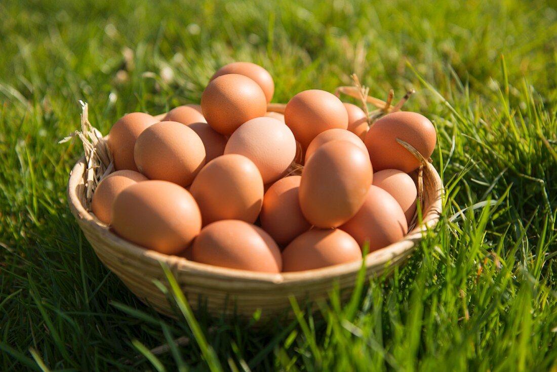 Brown hen's eggs in a basket in a field