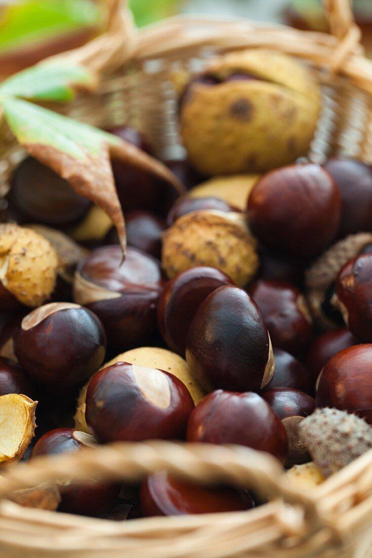 Horse chestnuts in a wicker basket