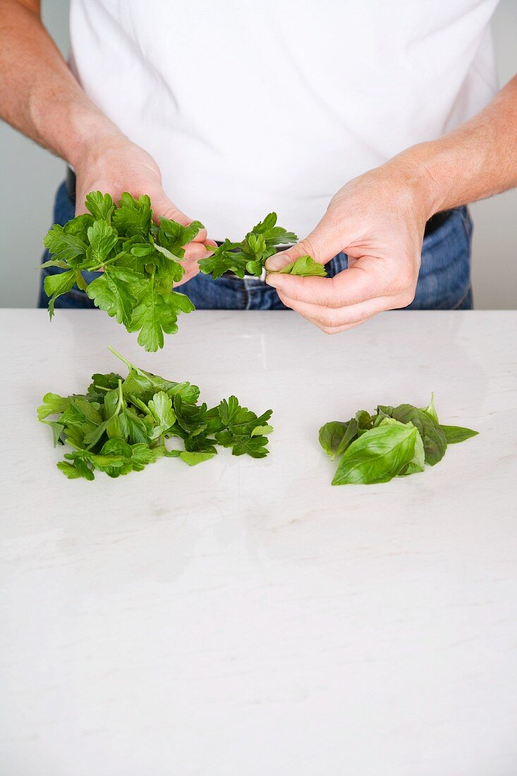 Herb leaves being stripped off