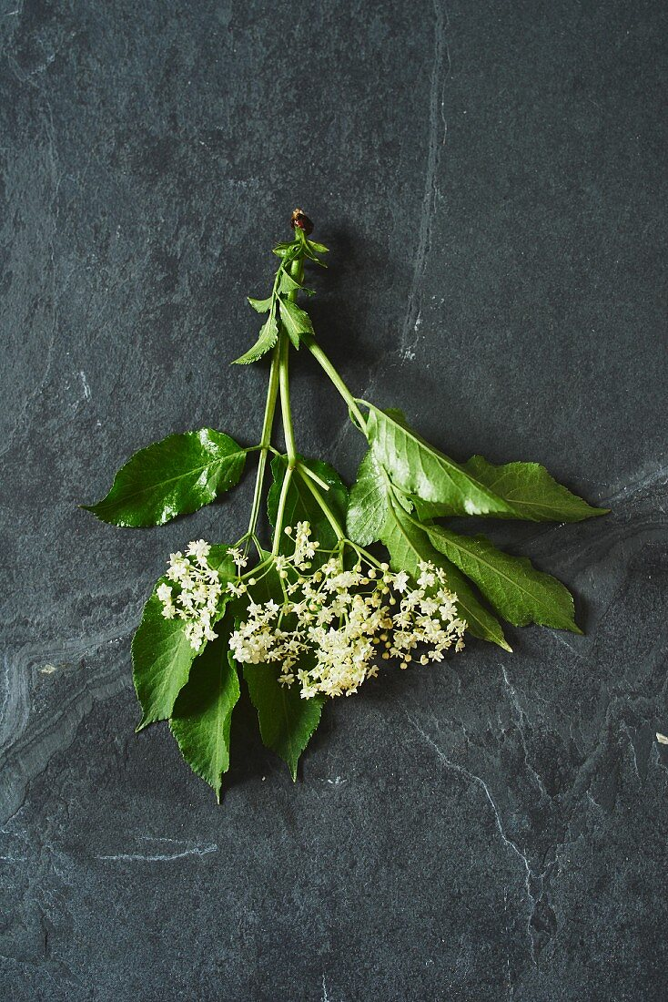 Elderflowers with leaves on a grey surface (seen from above)