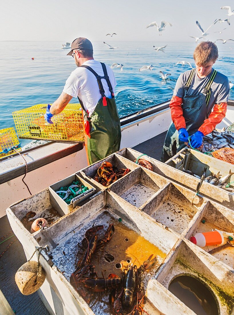 Fishermen working on boat with freshly caught lobsters and fish