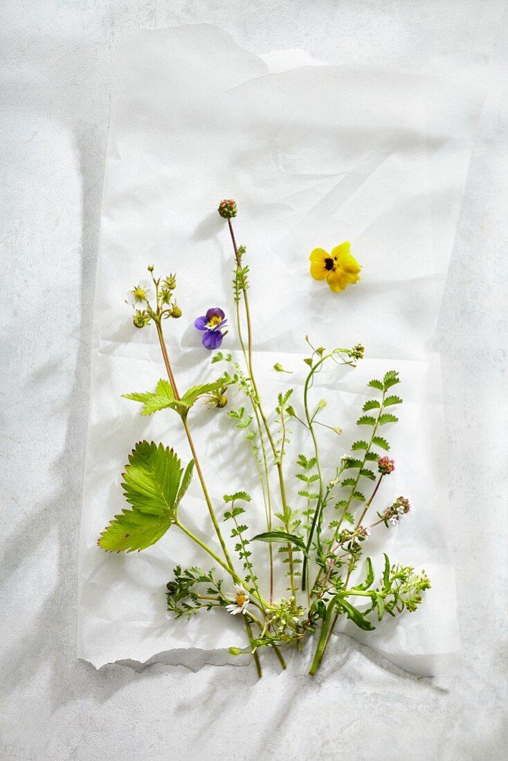 An arrangement of various fresh herbs and flowers