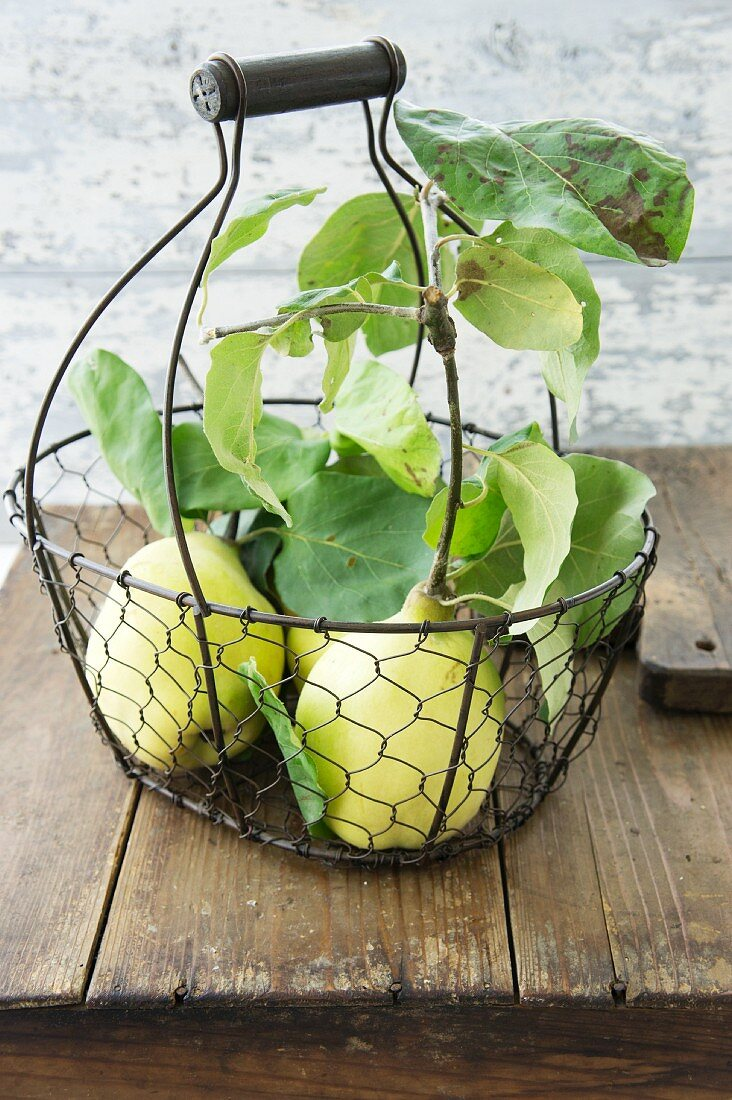 Quinces in a wire basket