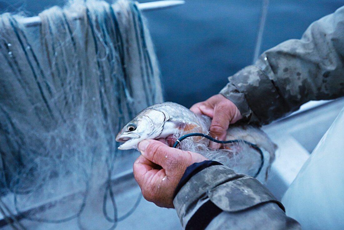 Fischer am Bodensee mit frisch gefangenem Fisch