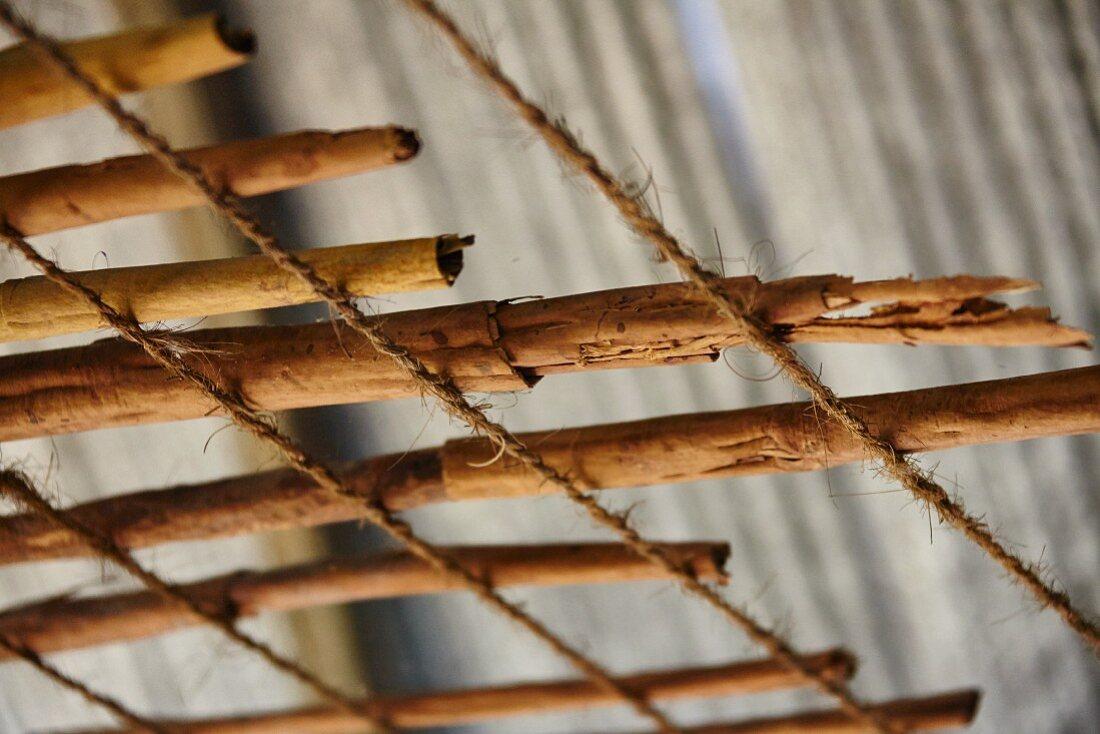 Cinnamon sticks drying (Sri Lanka)