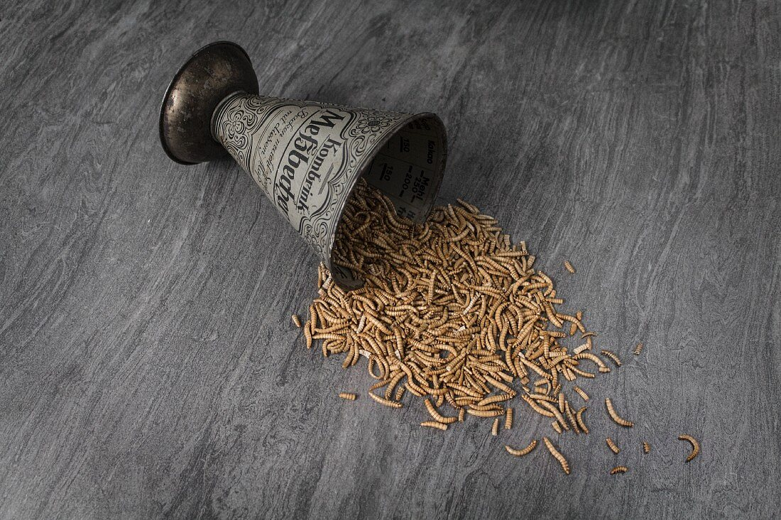 Meal worms falling from a small metal cup