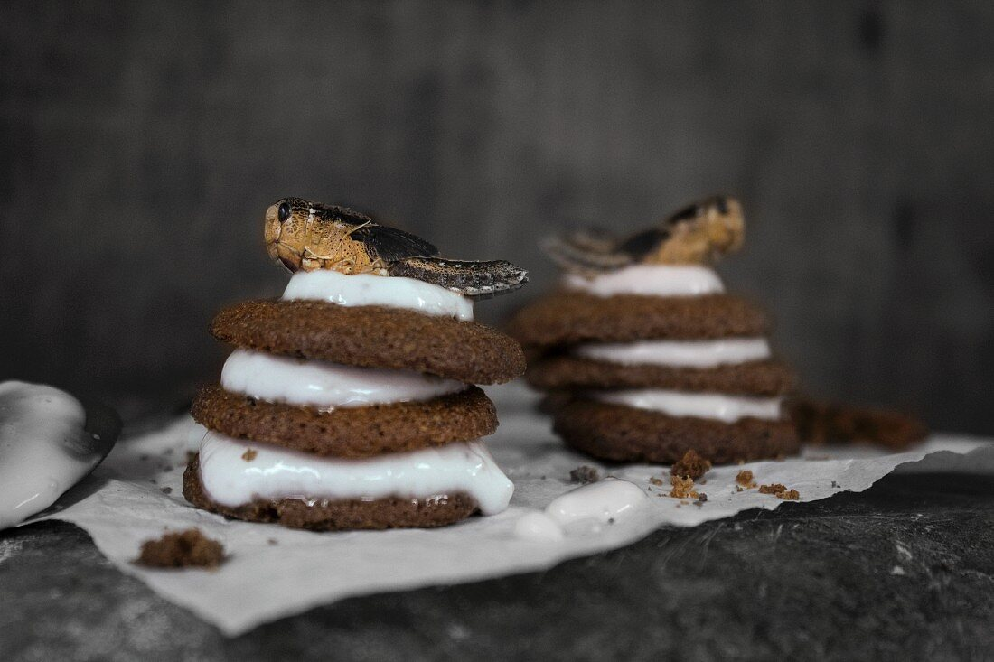Chocolate insect cakes with milk cream topped with grasshoppers