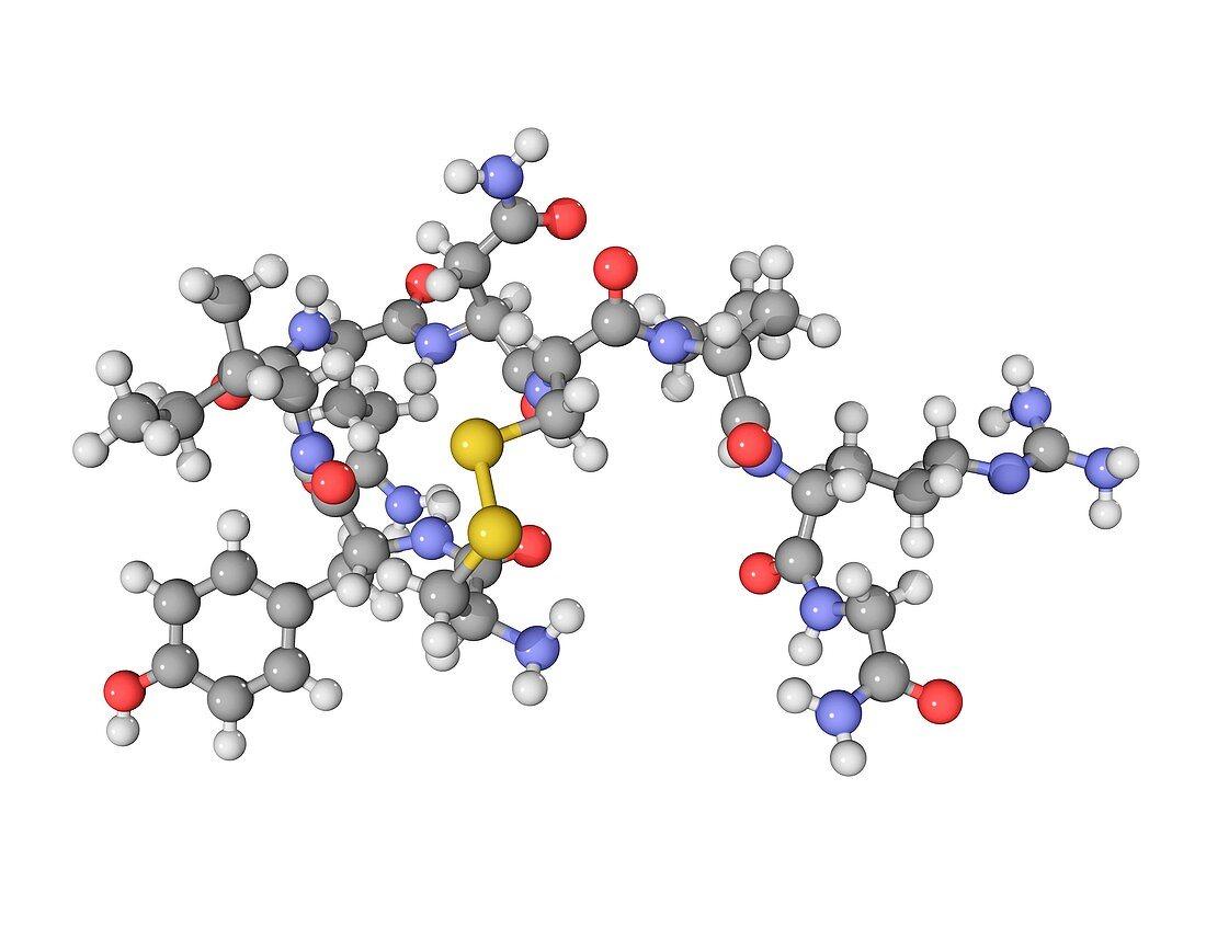 Vasopressin hormone molecule