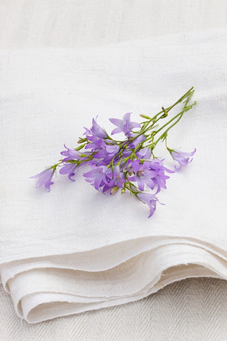 Rampion flowers on a linen cloth outside