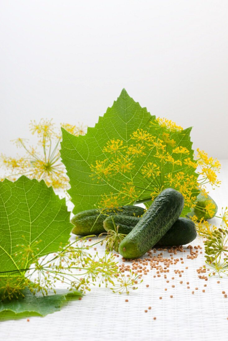 Fresh gherkins, vine leaves, dill flowers and mustard seeds