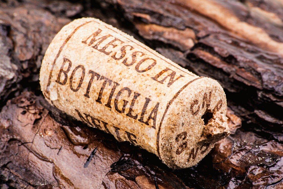 A wine cork on bark