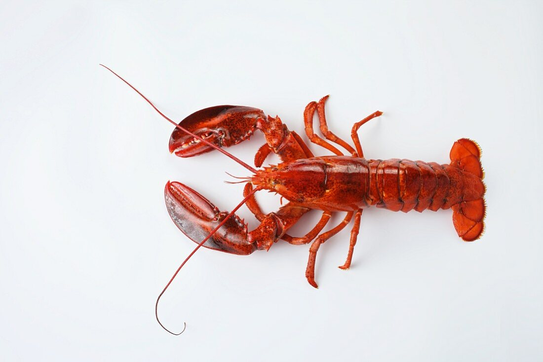 A lobster on a white surface