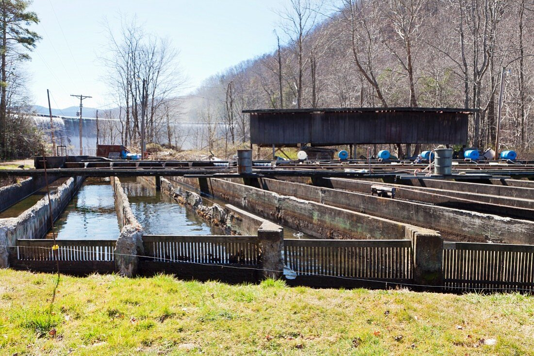 A trout farm with a dam in background