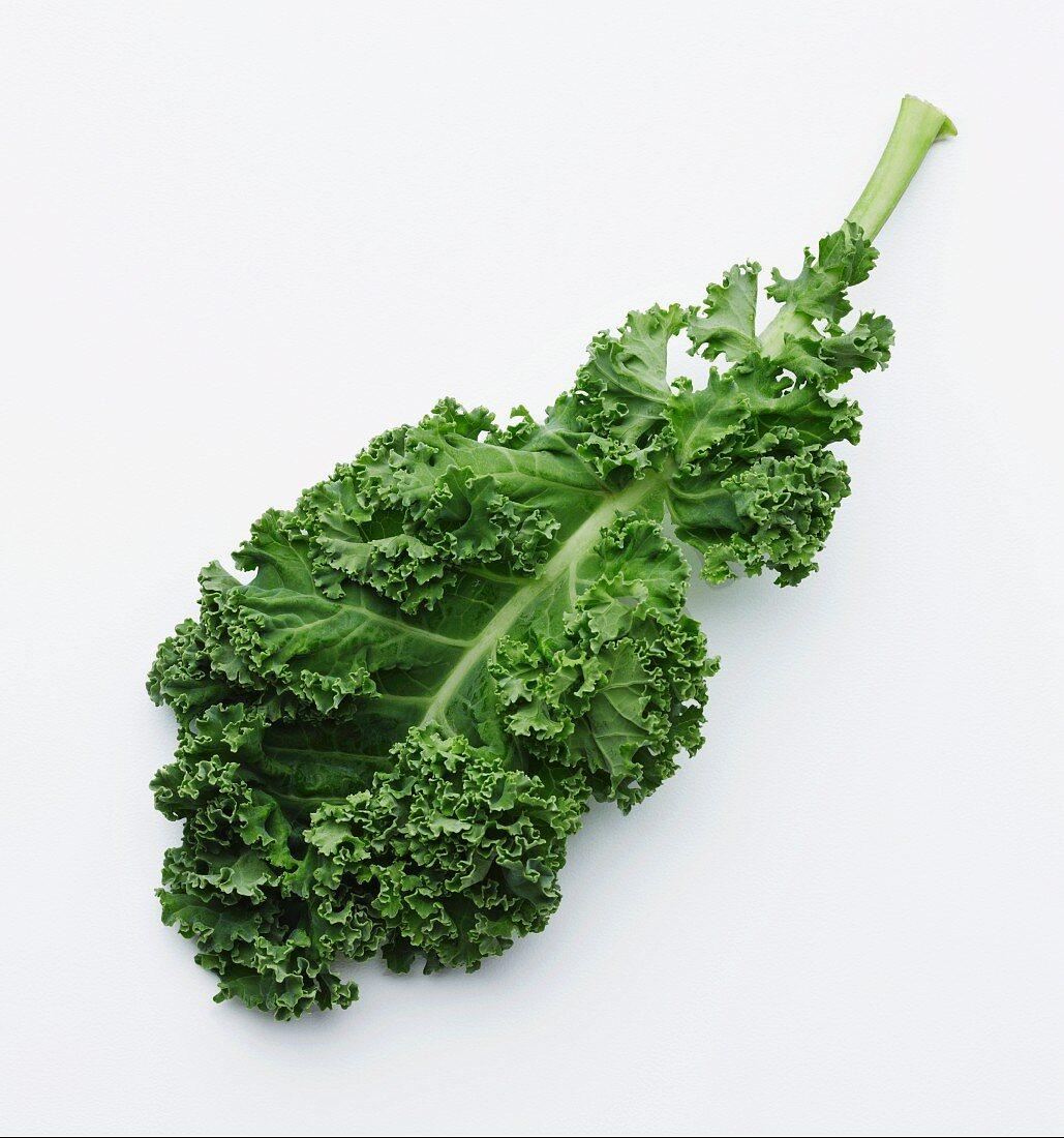 A fresh green kale leaf
