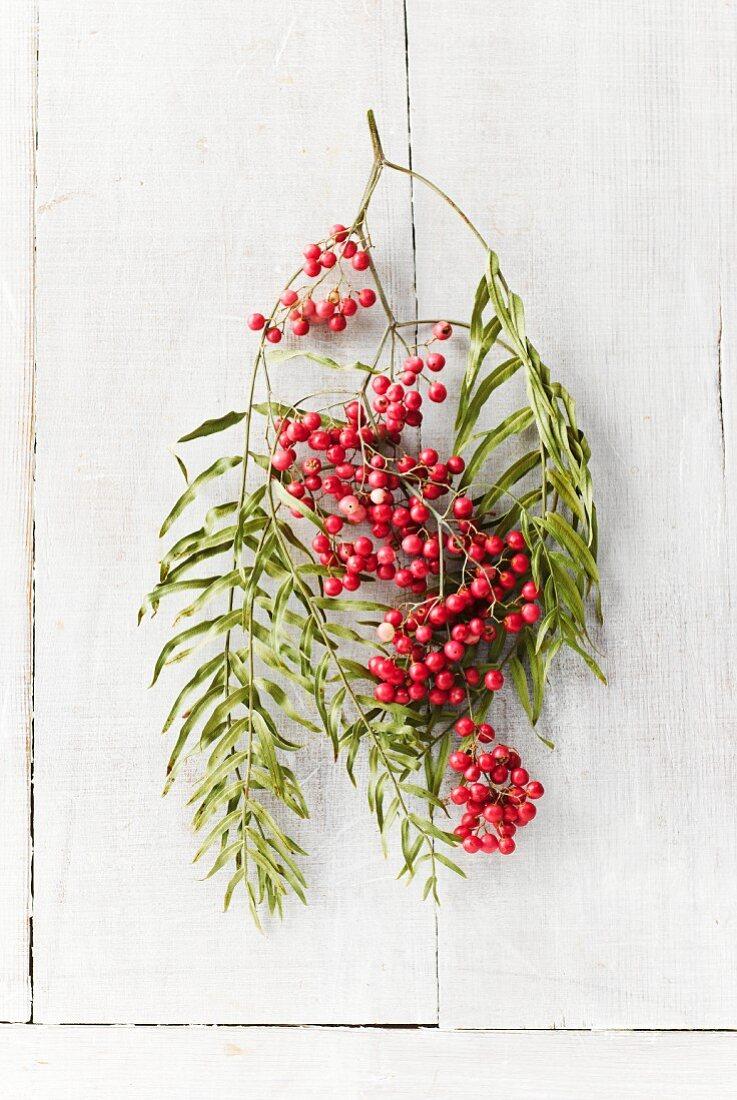 A sprig of rowan berries