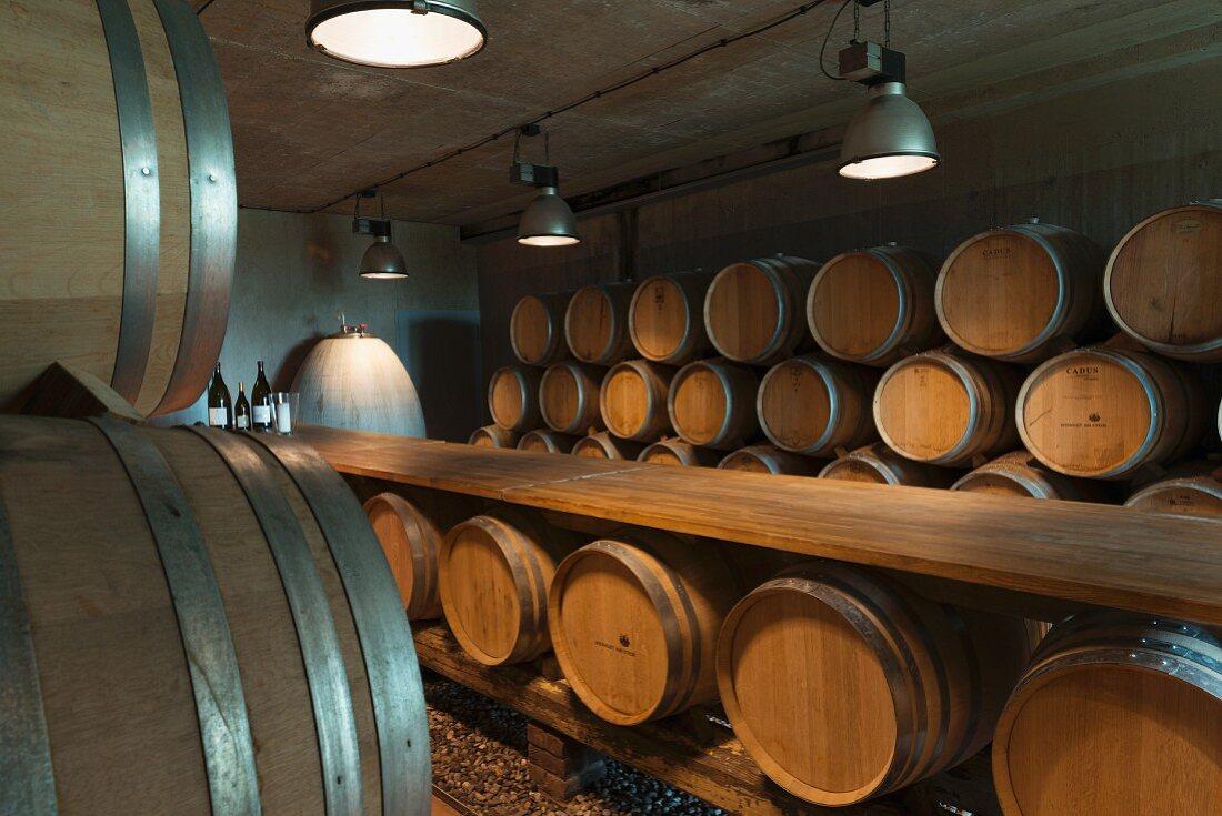 Barrique barrels stored in a wine cellar; Weingut am Stein, Würzburg