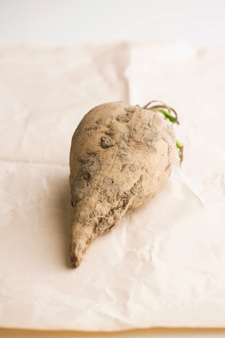 A soil-covered sugar beet on a piece of paper