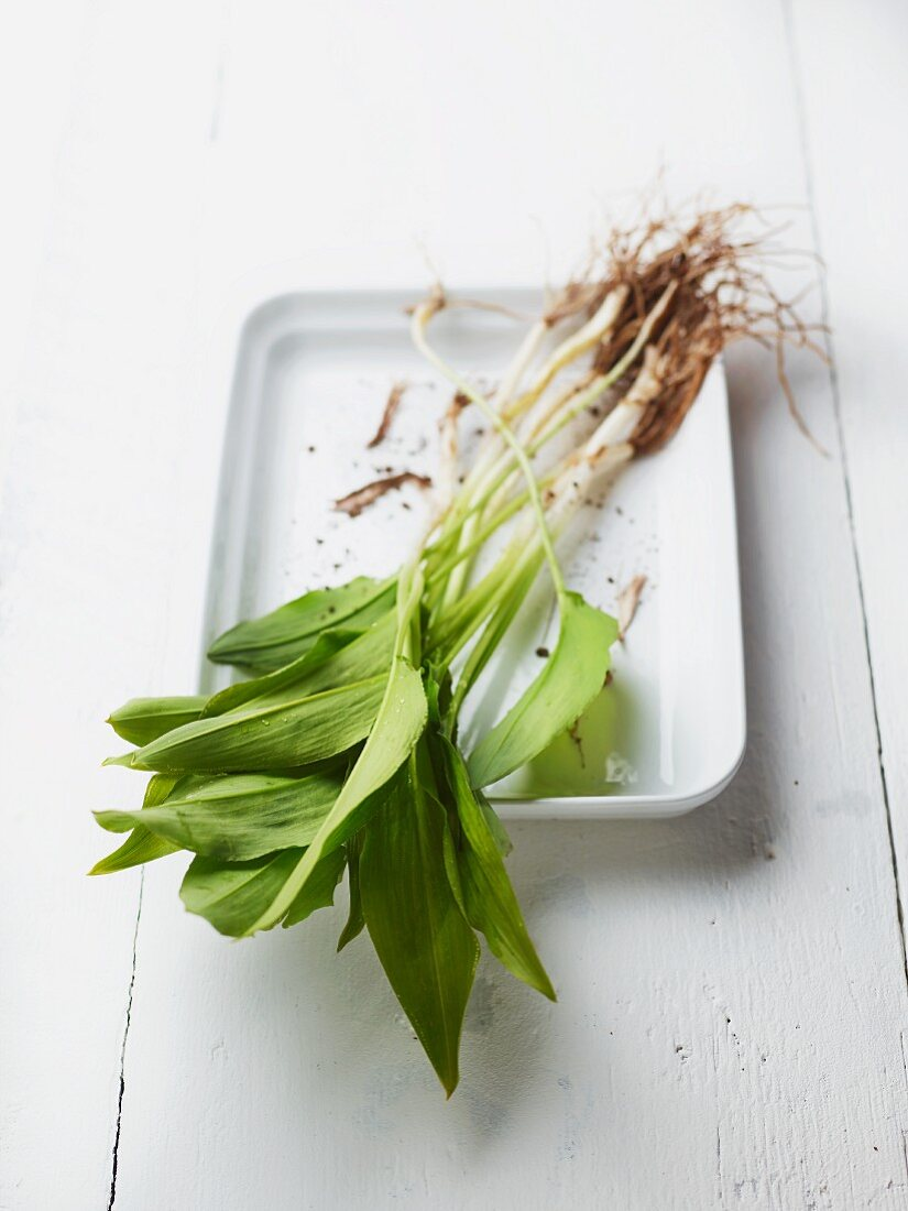 Fresh wild garlic with roots