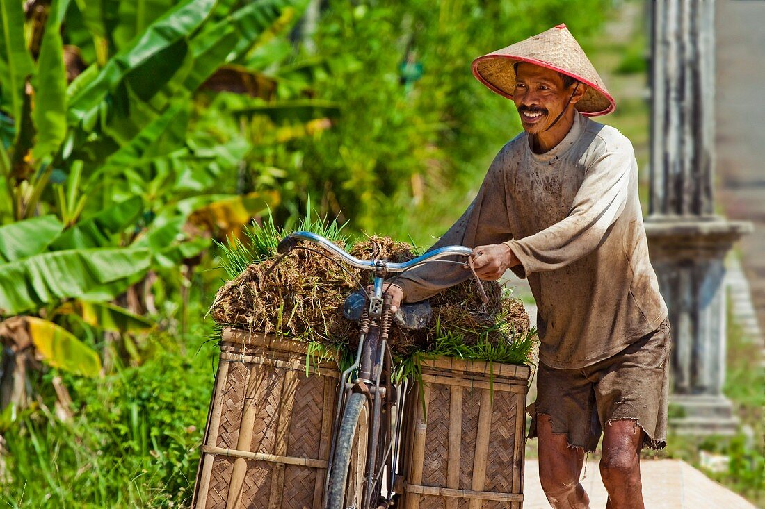 A rice farmer with a load of rice seedlings, Pangandaran, West Java, Java, Indonesia