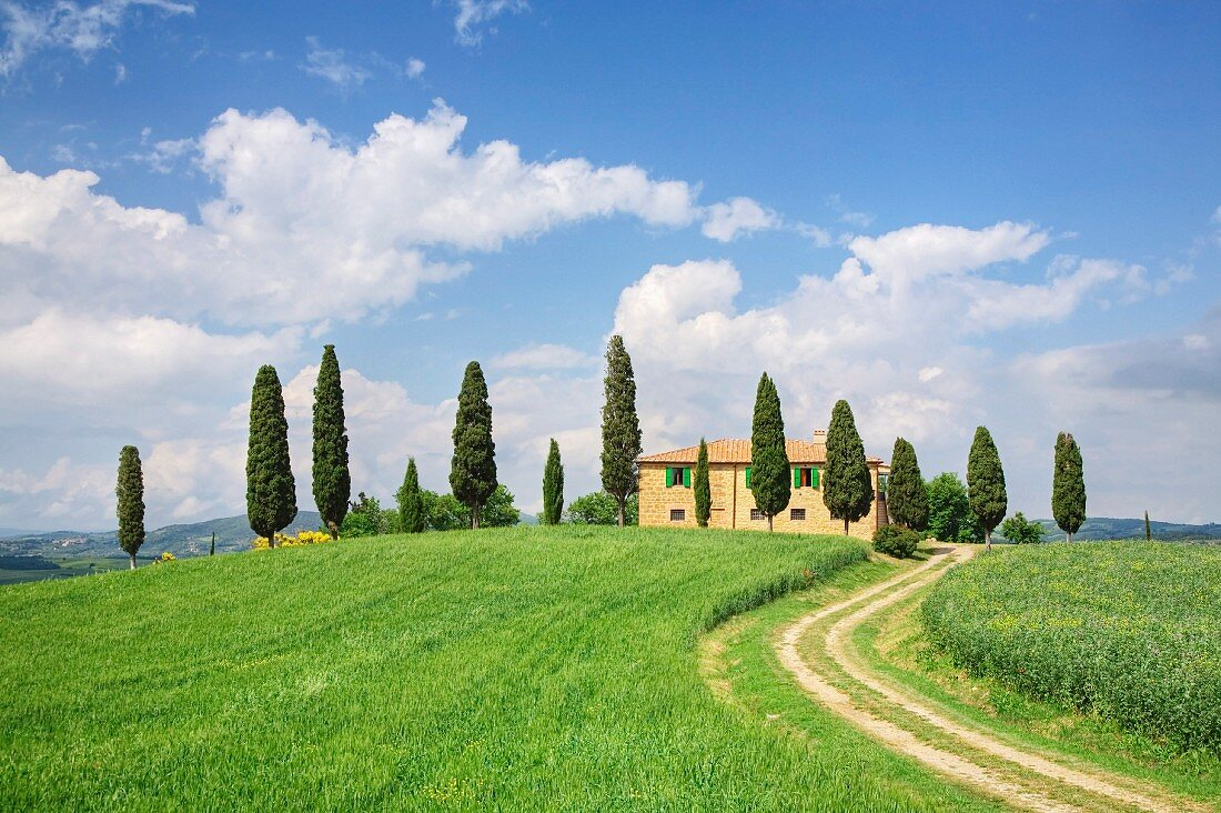 A Tuscan farm house surrounded by cypress trees on a hill near Pienza; UNESCO World Heritage Site, Val d'Orcia, Tuscany, Italy