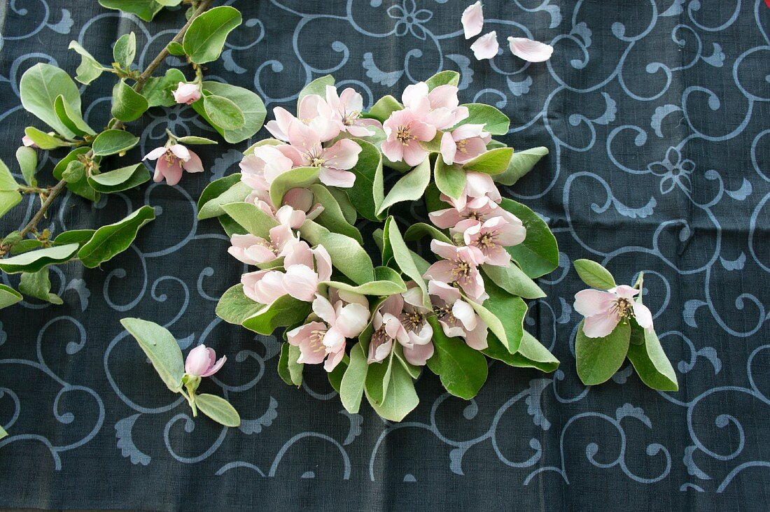 A wreath of quince flowers (seen from above)
