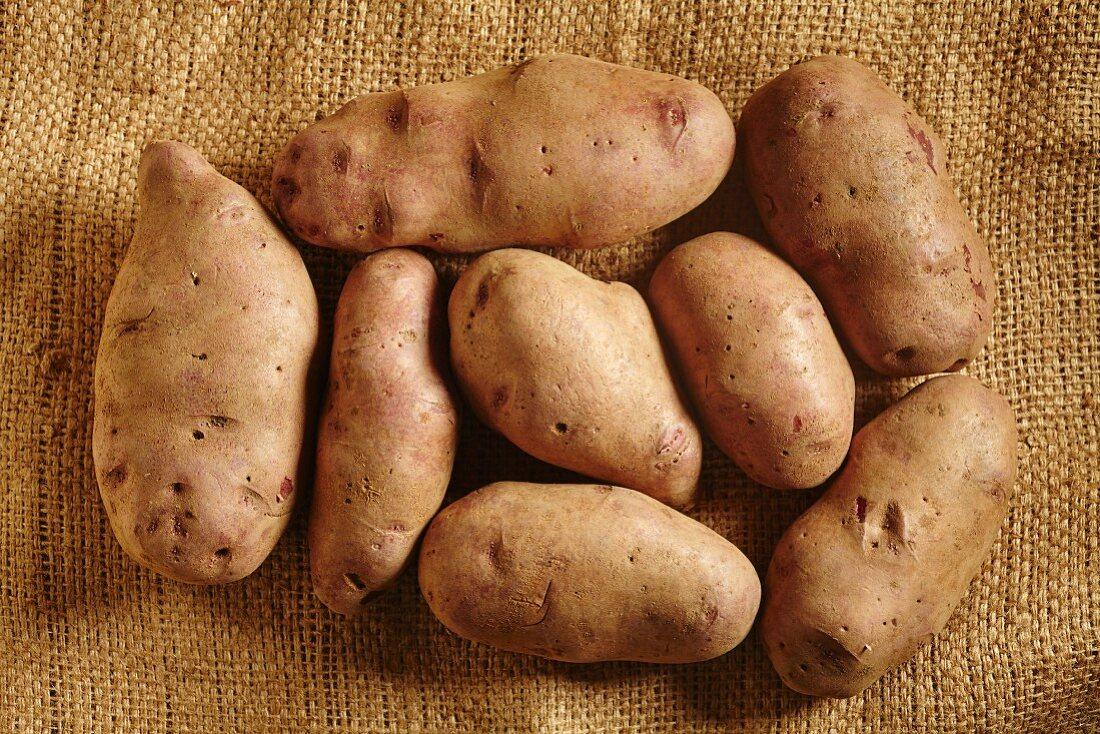 Organic, purple potatoes from Vermont, USA
