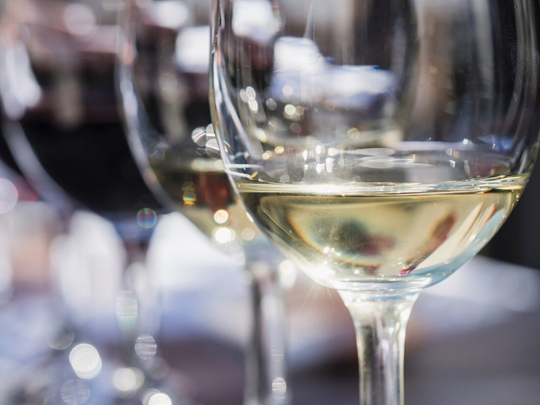 Various glasses of wine served for a wine tasting session in a winery in Western Cape, South Africa