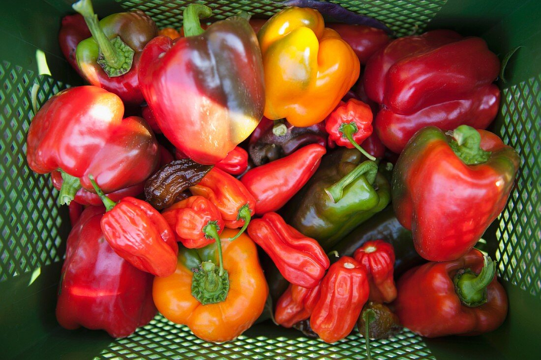 Various peppers in a crate