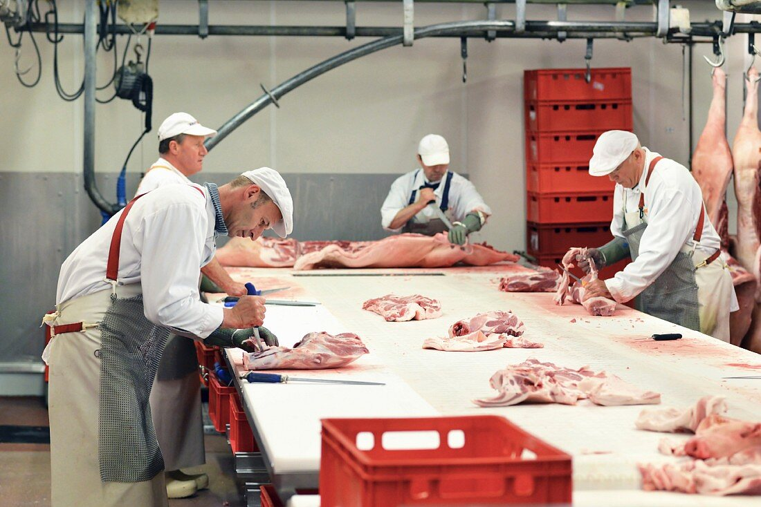 Pig carcasses being butchered in a slaughterhouse