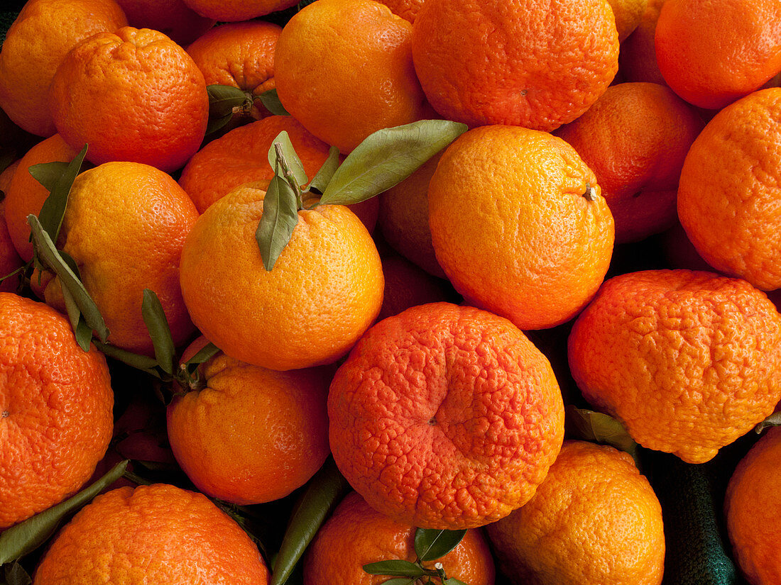 Shasta Gold mandarins at a farmers market
