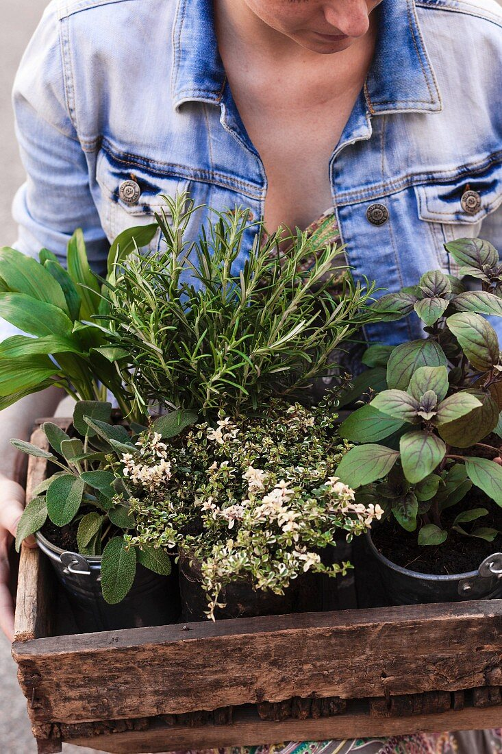 Woman carrying wooden crate of various potted garden herbs