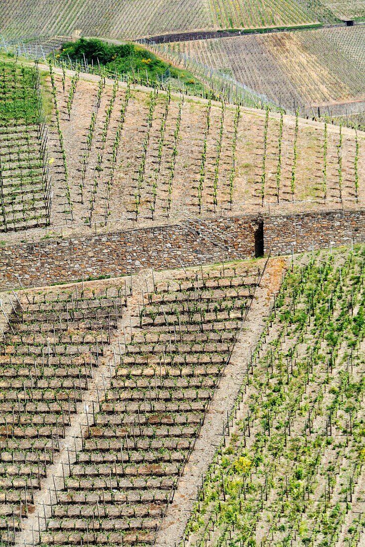Vineyards in the Ahr Valley, Germany