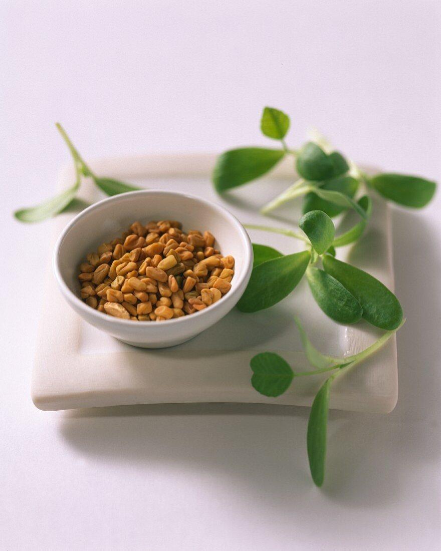 A bowl of fenugreek seeds